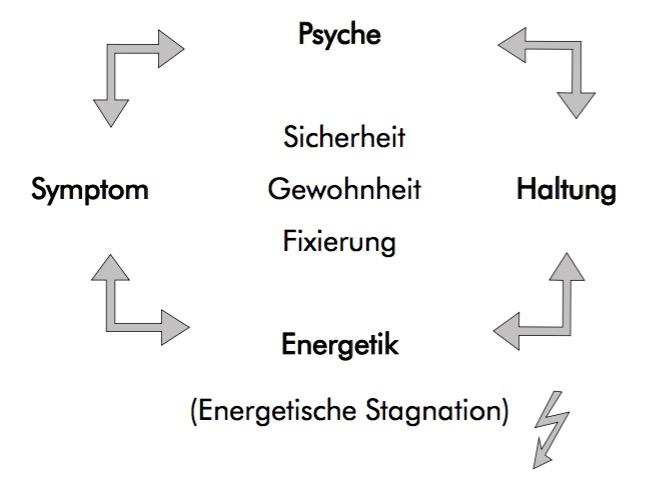 Das energetische Psycho-Somatische Kreismodell der Ohrakupunktur.