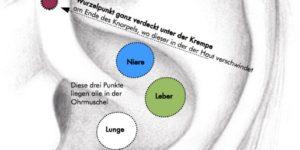NADA-Akupunktur Lokalisation der Punkte