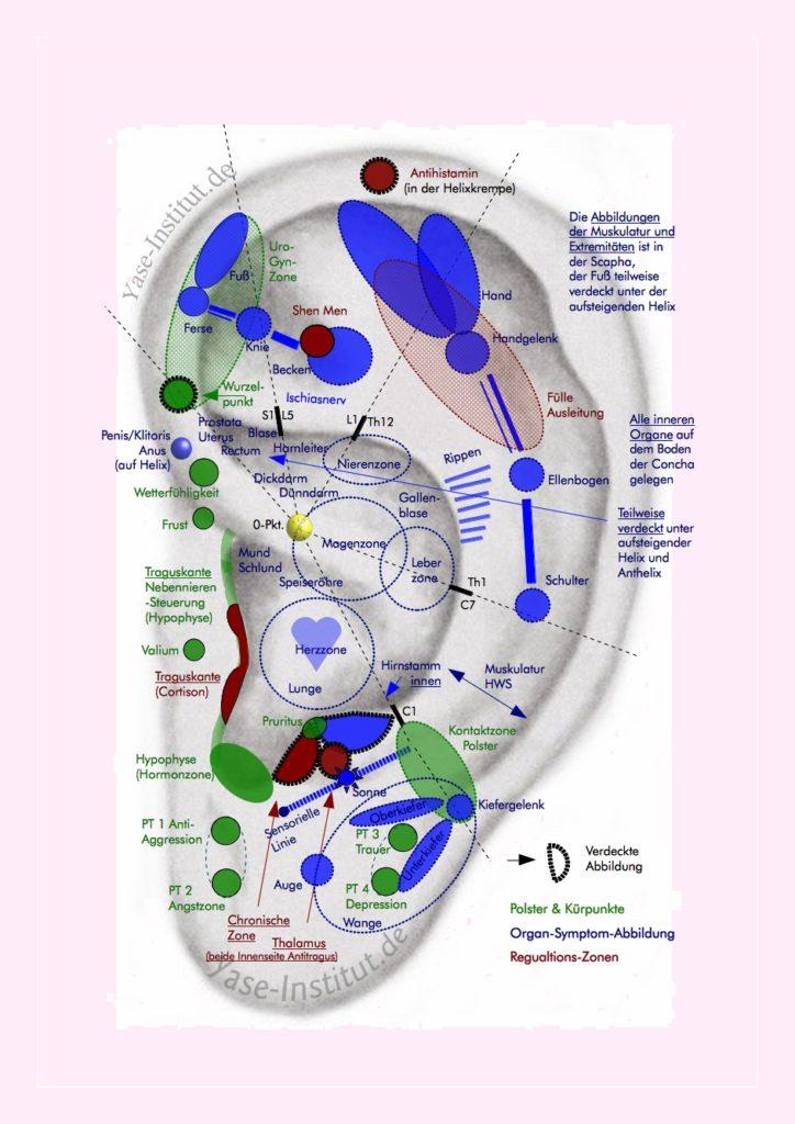 Die Ohrakupunktur-Punkte der Balancierten Ohrakupunktur mit zusammenfassenden Punkte-Zonen